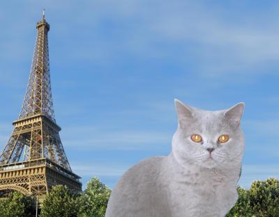 Endlich Urlaub in Paris